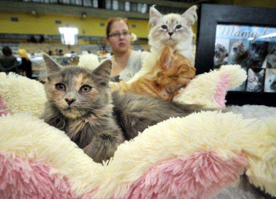 LIBIĄŻ. Koty piękne i drogie (ZDJĘCIA)