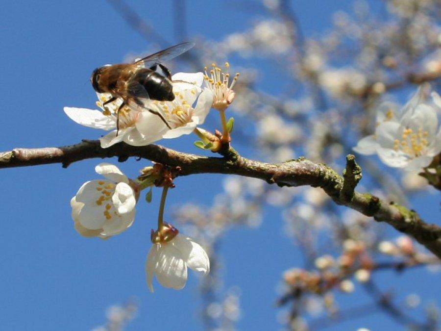 Uciążliwa wiosna - alergia w ataku