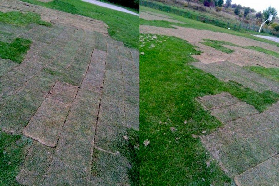 Trawa uschła, bo nie było wody