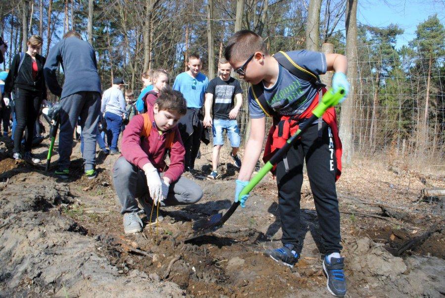W Prima Aprilis uczniowie całkiem na serio zasadzili drzewa