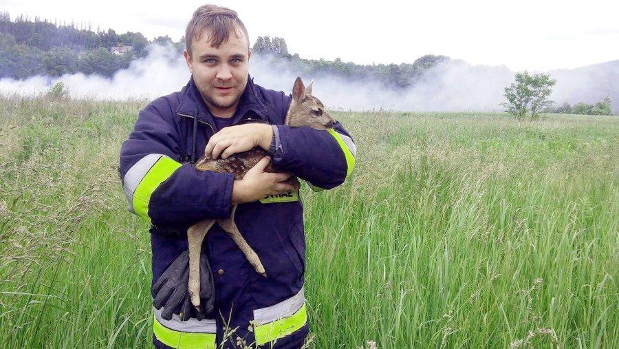 Strażacy uratowali sarenkę. Wcześniej ktoś podpalił łąkę
