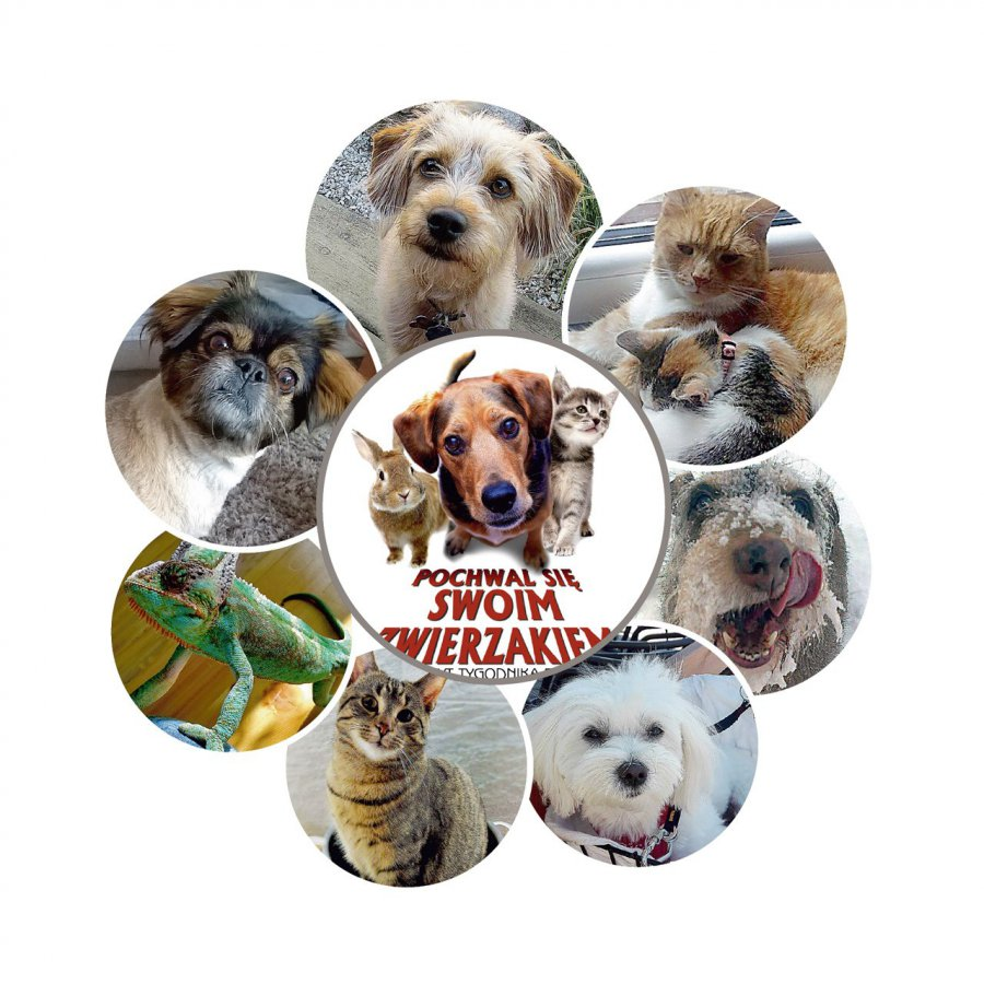 Miłośnicy zwierzaków przysłali prawie 400 zdjęć do naszego plebiscytu