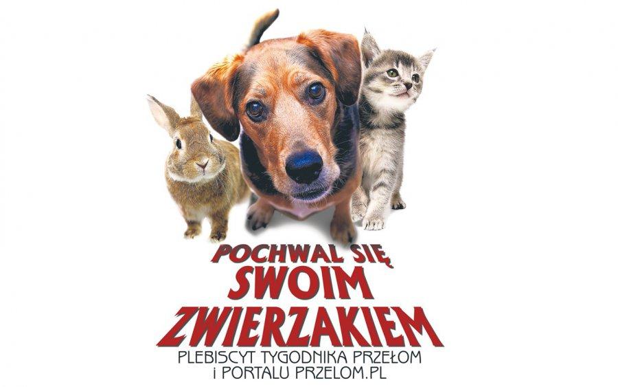 """Rozstrzygnięcie plebiscytu """"Pochwal się swoim zwierzakiem"""" w sobotę w Libiążu"""