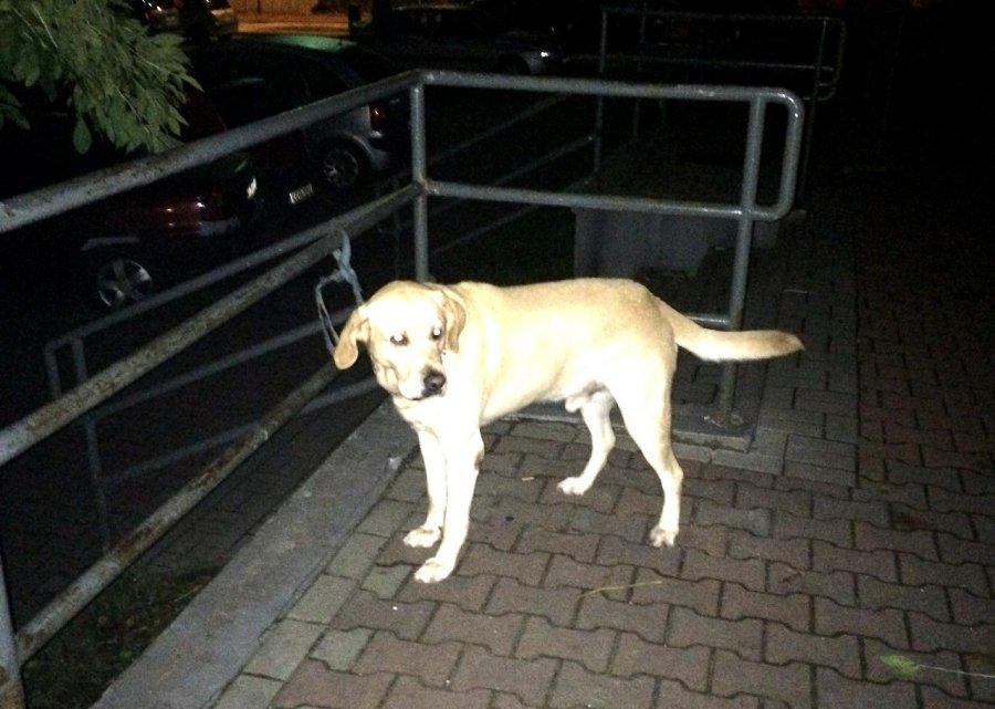 Zwierzę przywiązane do barierki w nocy czekało na pomoc