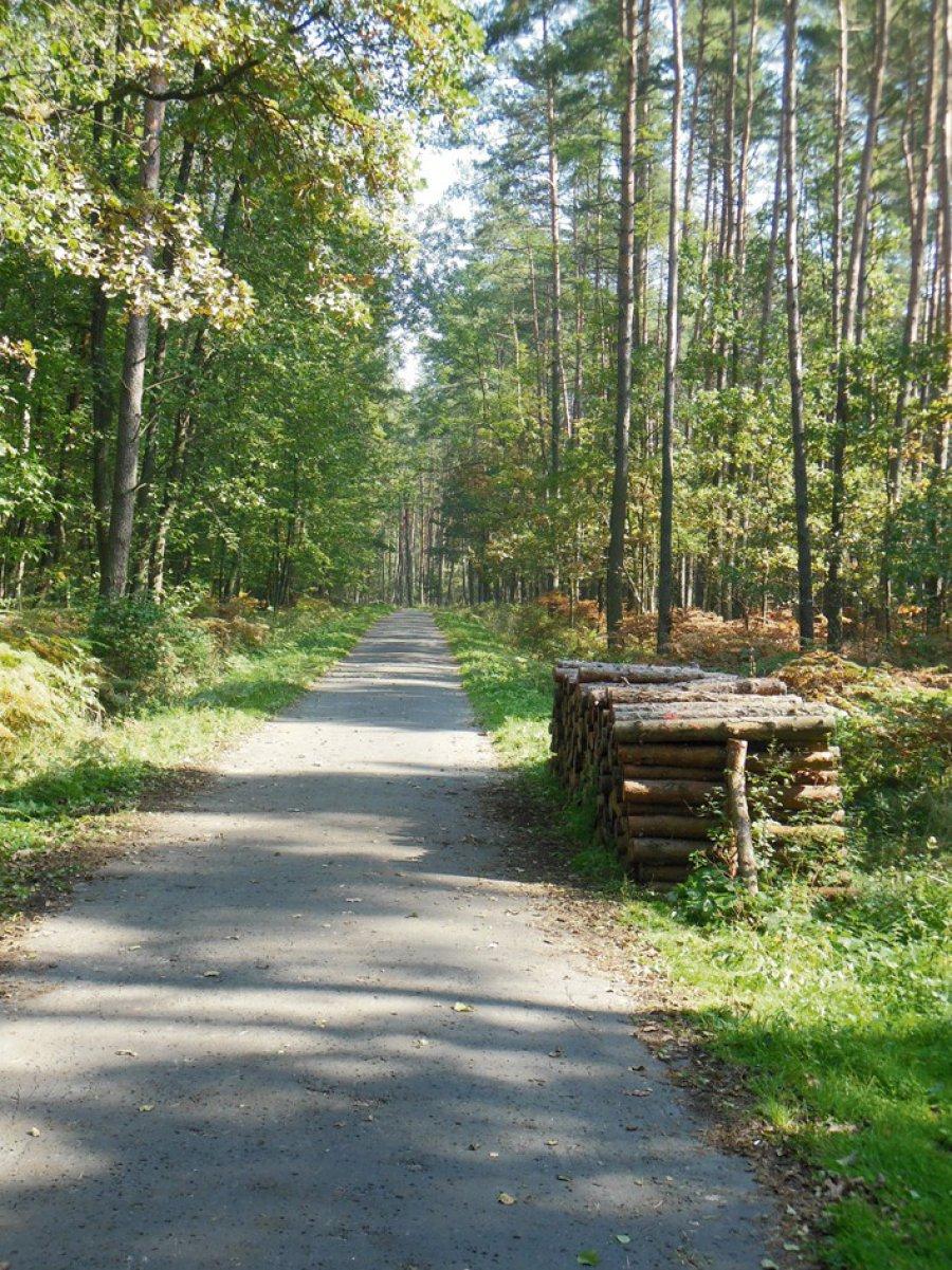 Krakowska droga Toporczyków