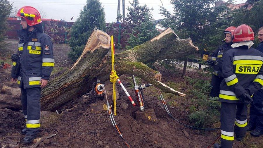 Mężczyzna zginął przygnieciony przez drzewo