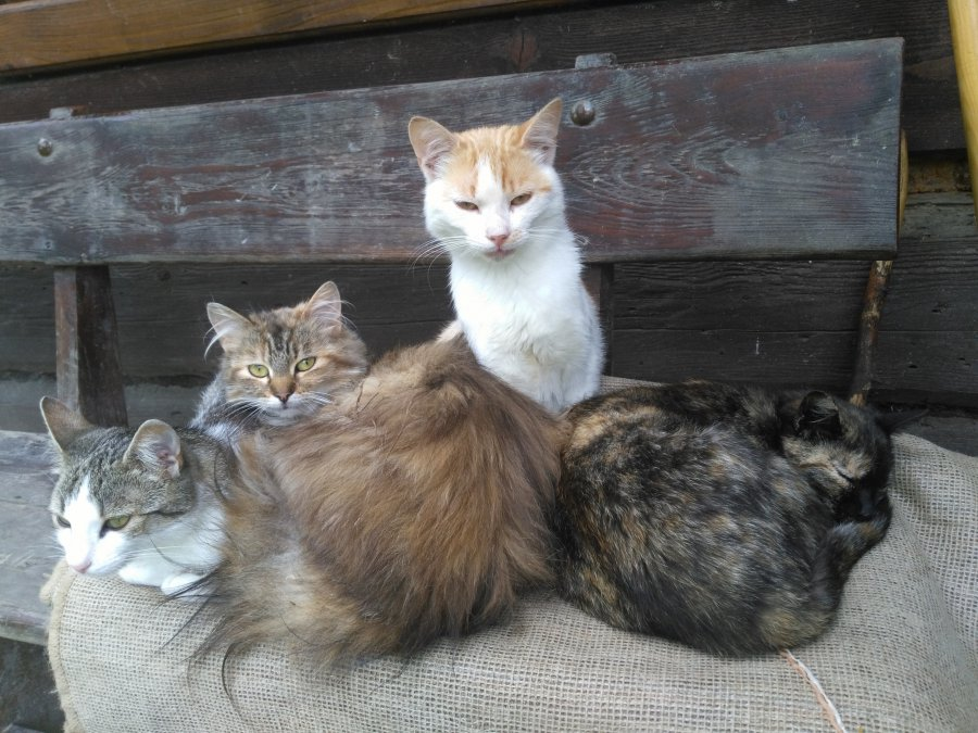 Dzisiaj świętują Wasze koty