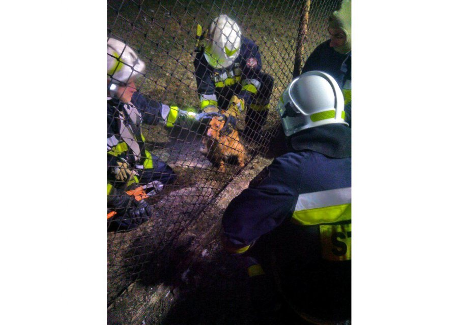 Strażacy uratowali pieska