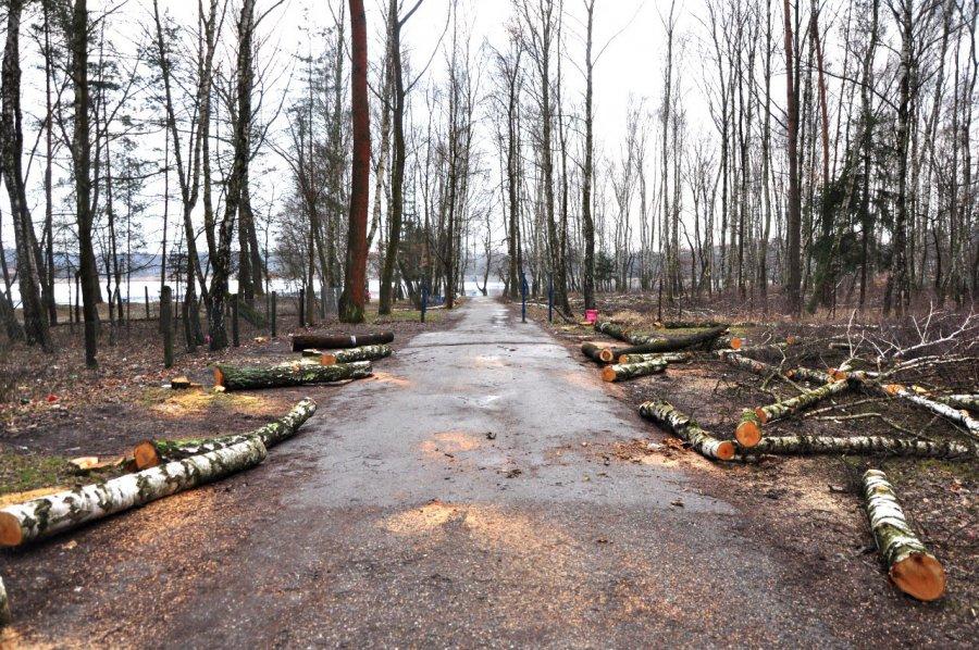 Od wycinki drzew rozpoczęło się urządzenie Chechła
