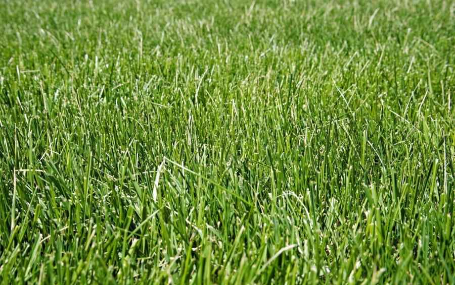 Zakładanie trawnika, krok po kroku