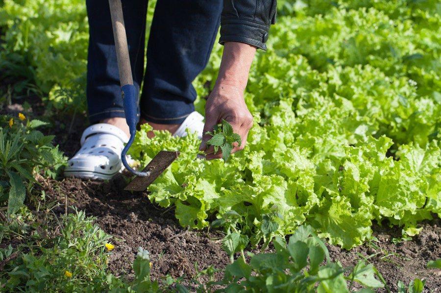 Chwasty w ogrodzie – jak z nimi walczyć?
