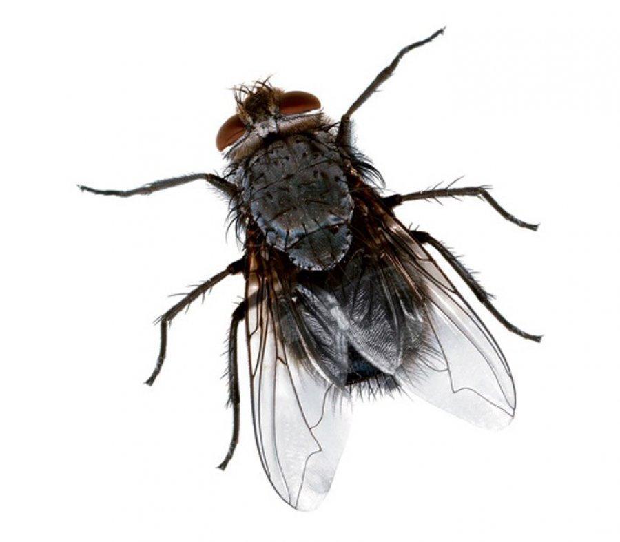 Sposób na muchy