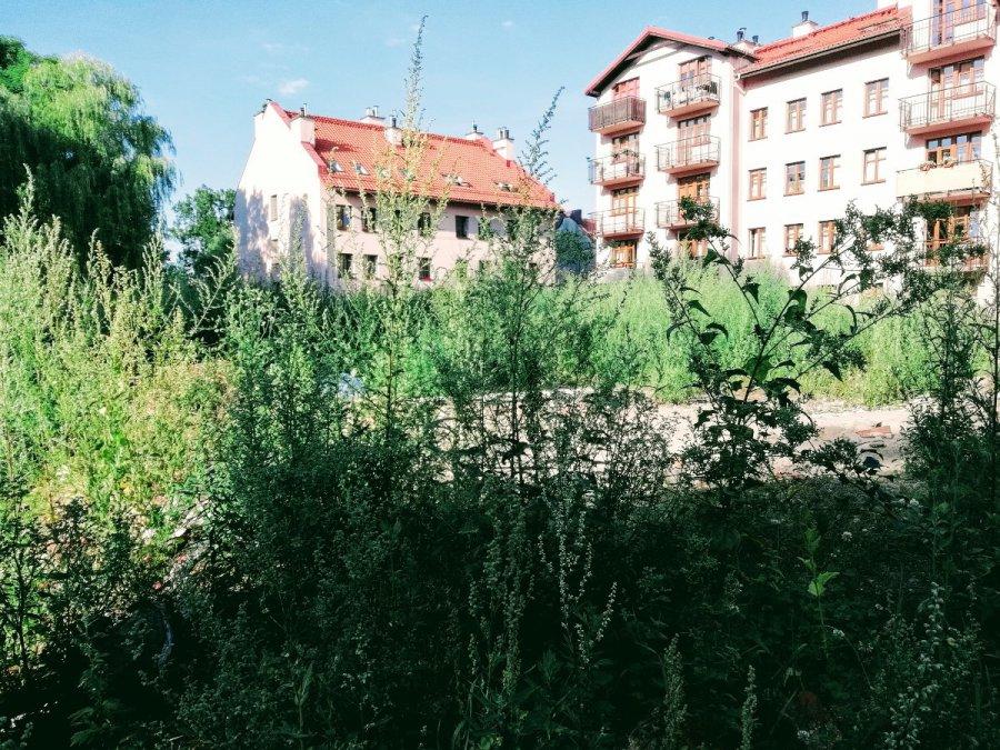 Dzika łąka powstaje w centrum Chrzanowa