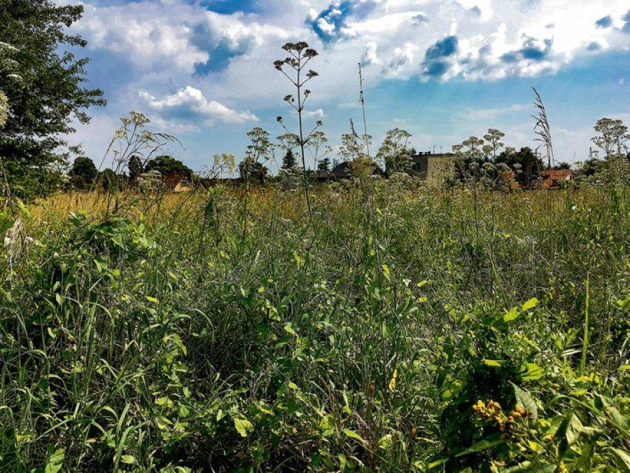 Gdy trawa zaczyna nie tylko brzydko wyglądać, ale i zagrażać