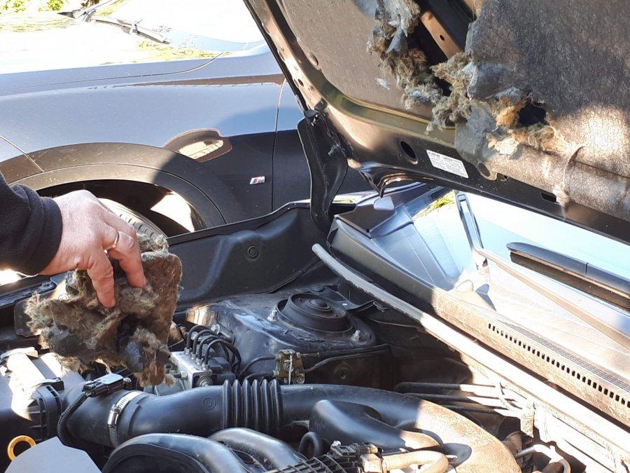 Kuny pustoszą samochody i poddasza