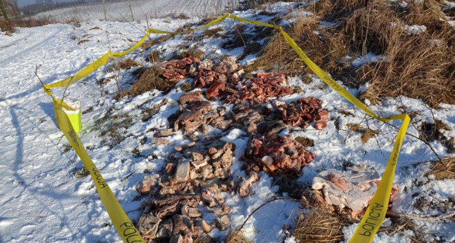 Ktoś wyrzucił tusze mięsa na pola