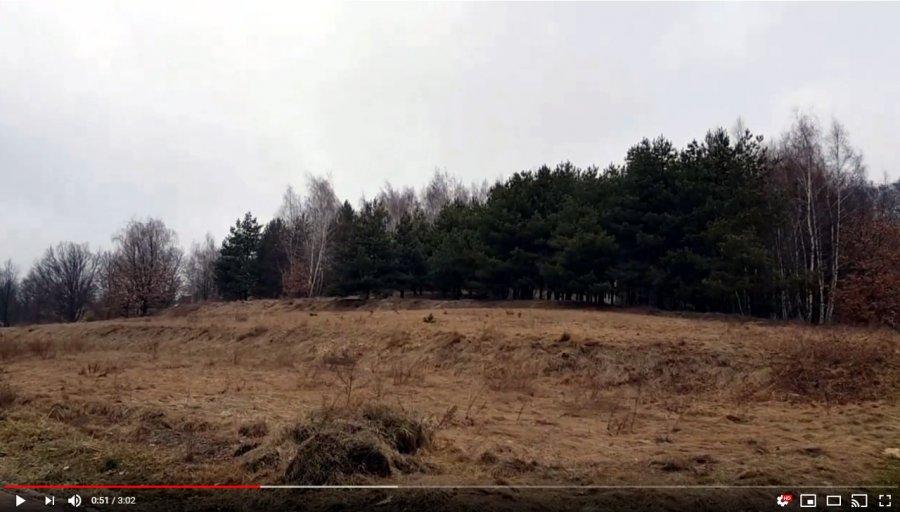 Czy wyciąć drzewa pod Lipowcem? (WIDEO)