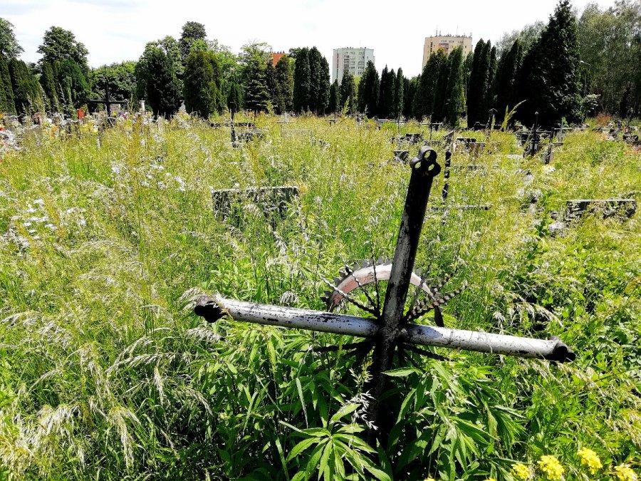 Na cmentarzu nie widać grobów
