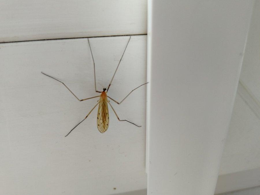 Komary zepsują wam wieczór. Jak się przed nimi obronić