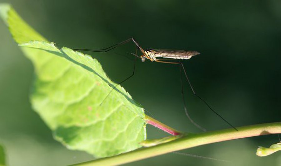 W Chrzanowie nie będzie oprysków przeciw komarom