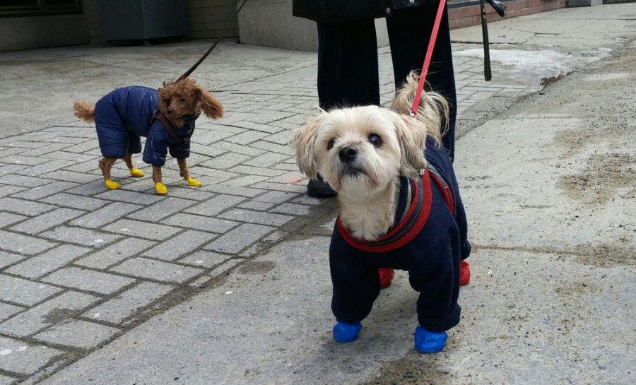 Buty dla psa – na zimę, wilgoć, błoto lub na wymagające wędrówki
