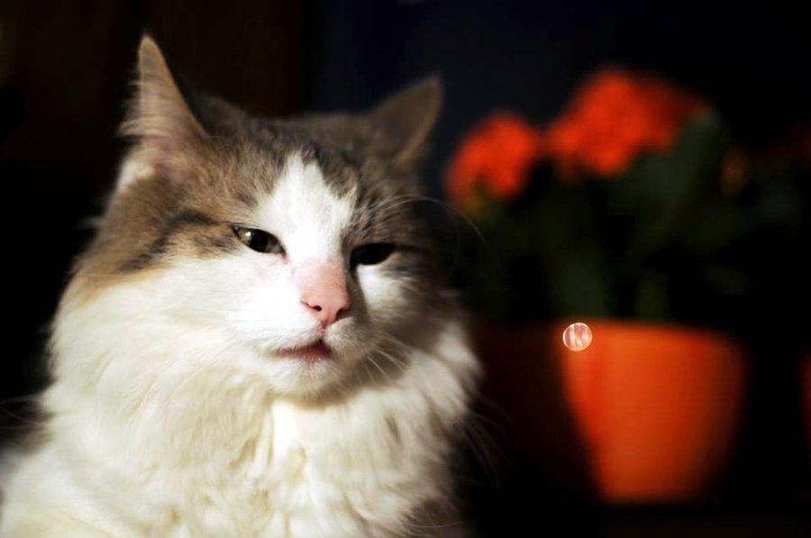 Boskie czy diabelskie? Koty mają dziś swoje święto