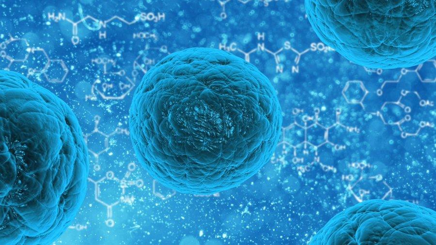Helicobacter pylori - czym jest, jakie są objawy i jak sobie z nią radzić?