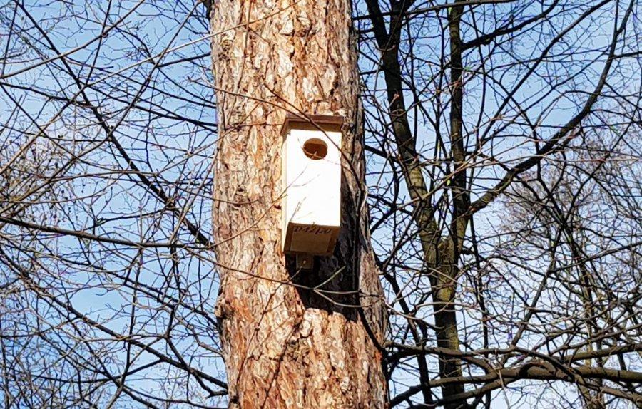 Na drzewach zawisły budki. Mają specjalne oznaczenia