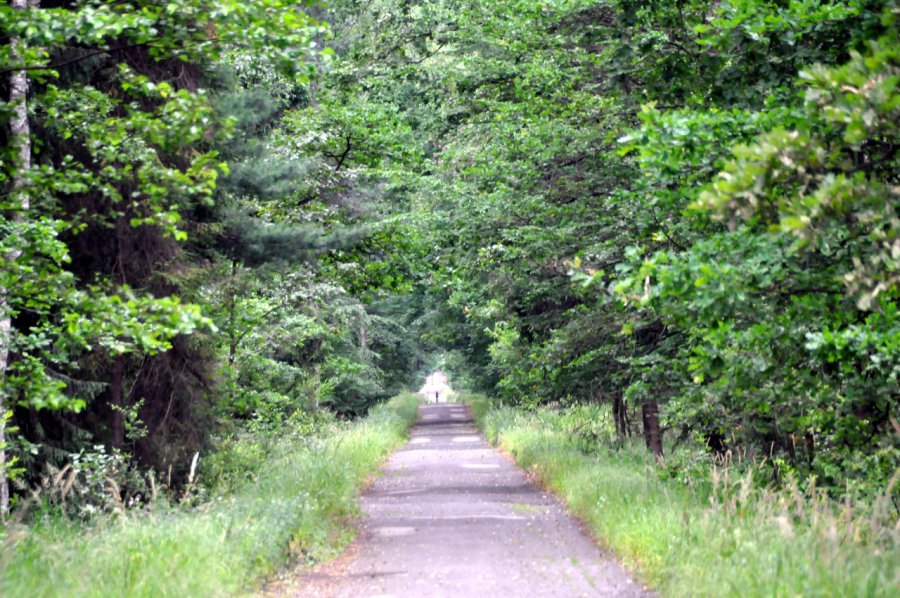 Nadleśniczy zakazał wstępu do lasu
