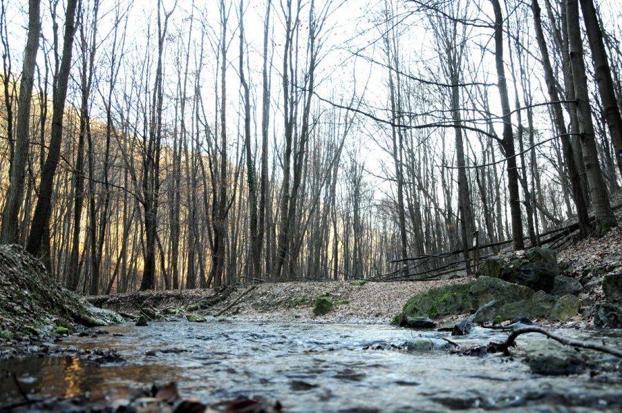 Nadleśnictwo odwołało zakaz wstępu do lasu