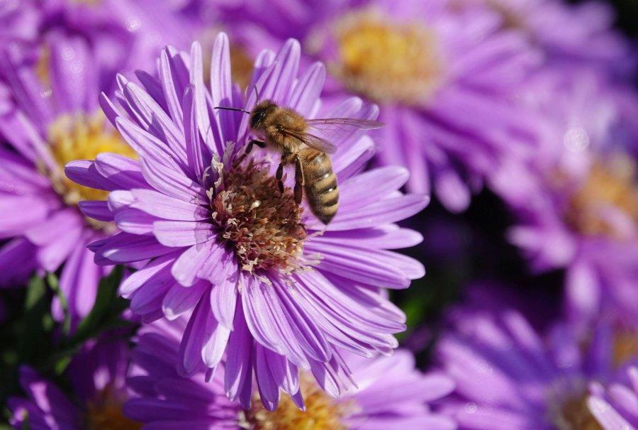 Pieniądze poczekają na pszczelarzy