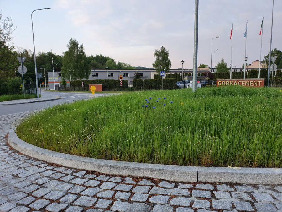 Powiatowe rondo w Trzebini prawie jak łąka kwietna
