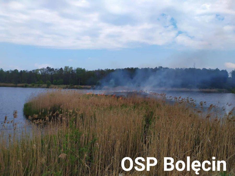 Podpalili trawy przy Gliniaku. Ptaki straciły gniazda