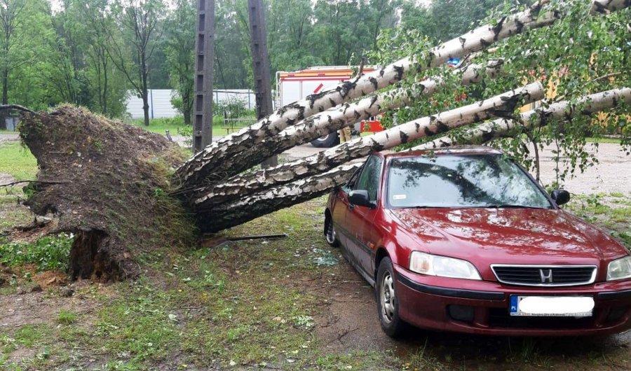 Powalone drzewa leżą na drogach