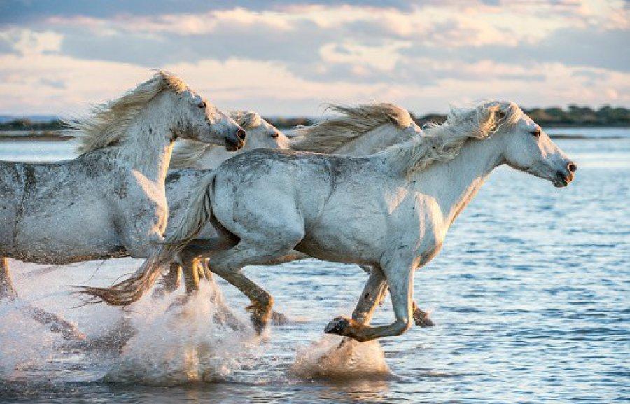 Pieniądze na to, żeby nie zatrzymać konia w biegu z powodu koronawirusa