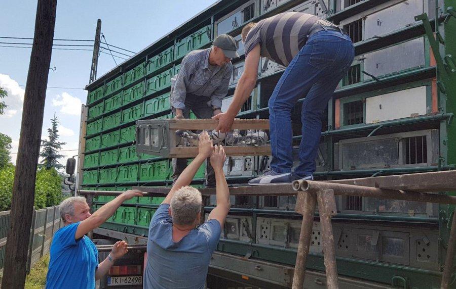 Gołębie pojechały do Niemiec. W niedzielę przelecą ponad 500 km do Libiąża (WIDEO)