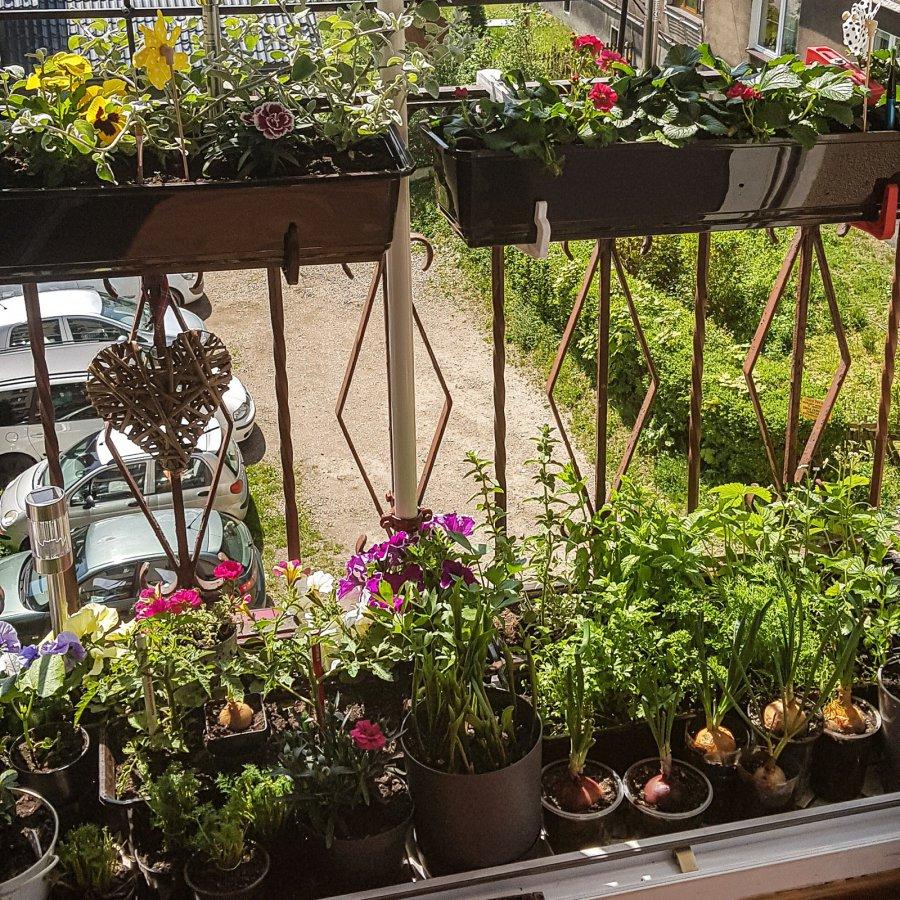 Pasjonatki ogródków i kwiatów nagrodzone. Eneris rozstrzygnął konkurs