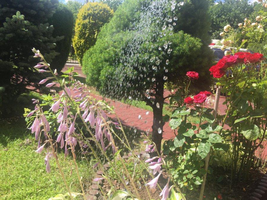 Często podlewasz ogródek? Nie przepłacaj i załóż wodomierz