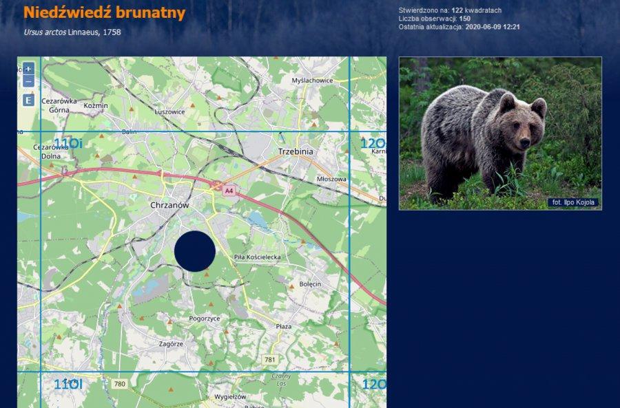 Drapieżniki w naszych lasach. Czy niedźwiedź też dotarł na ziemię chrzanowską?