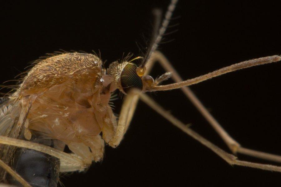 Was też tak gryzą komary?