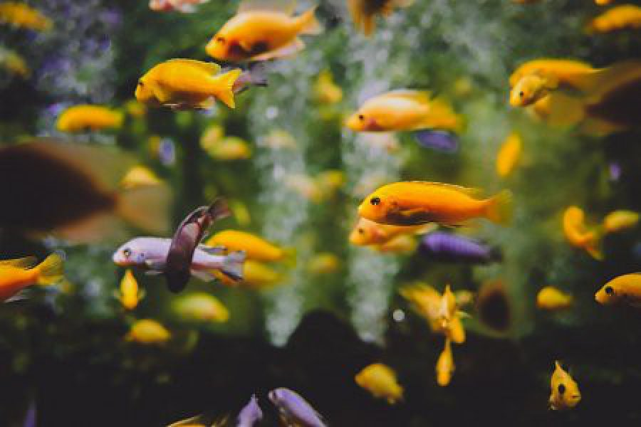 Napowietrzacz w akwarium – jak działa i kiedy jest potrzebny?