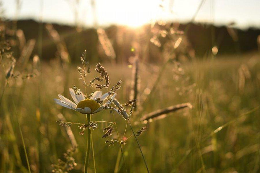 Chrzanów będzie zakładał łąki kwietne