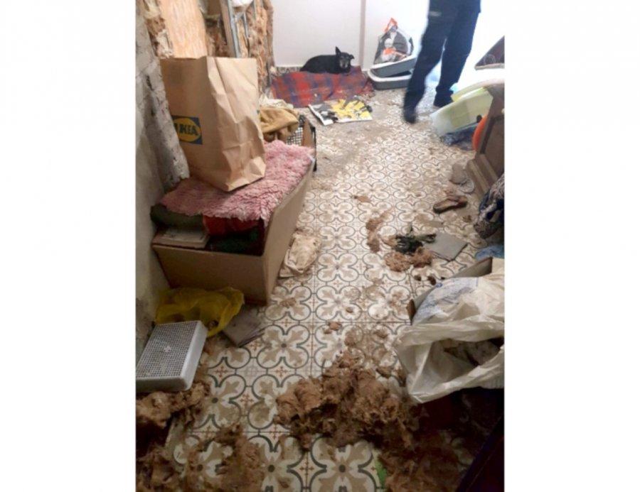 Martwe zwierzęta w domach. Kobiecie grozi więzienie