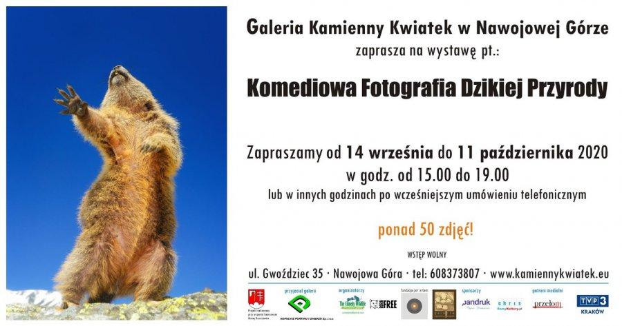 Po raz pierwszy w Polsce! Zwierzęta w zabawnych ujęciach. Warto zobaczyć!