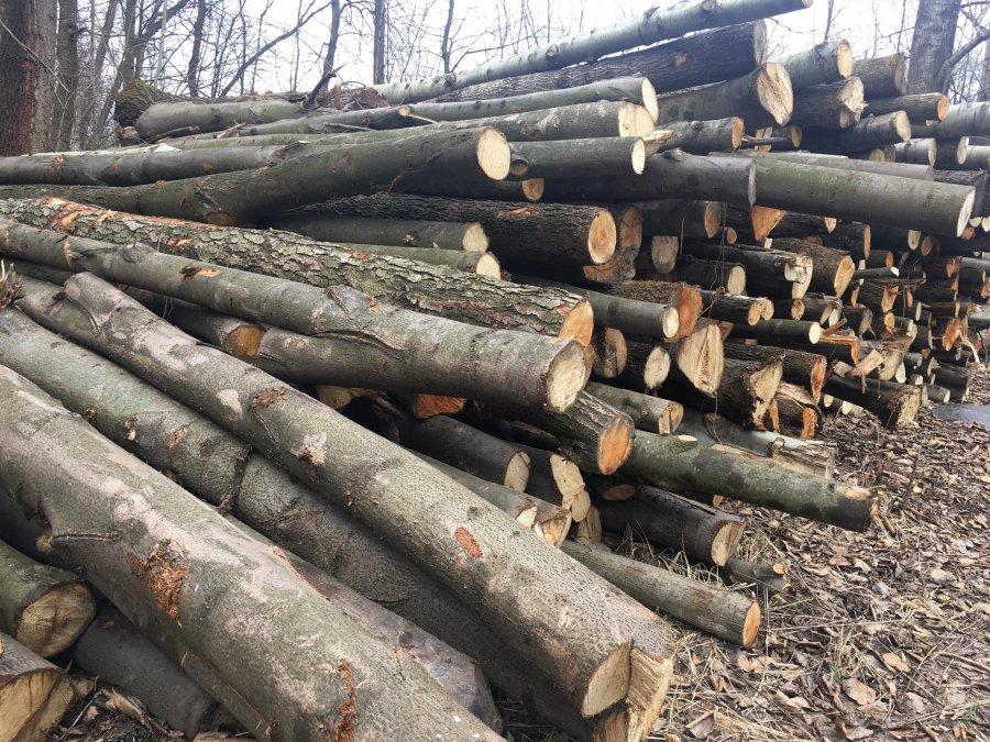 Drewno z Puszczy Dulowskiej. Jaka jest skala wycinki?