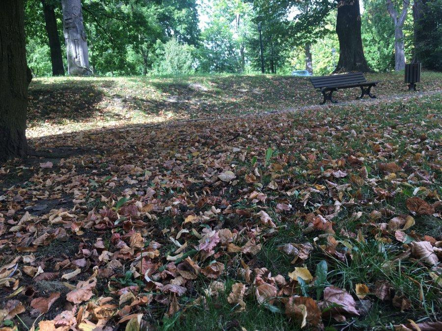 Opadające liście. Jak je zagospodarować?