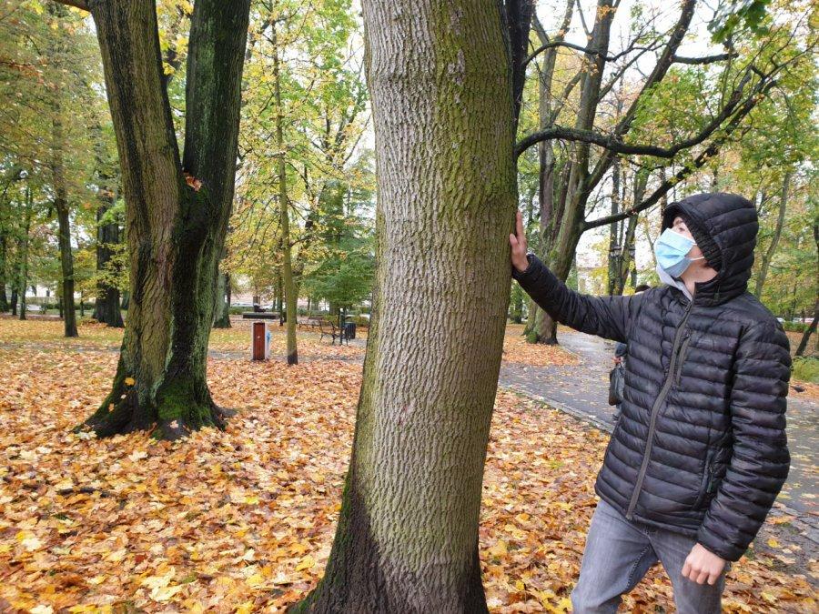 Zbiera podpisy, żeby ratować drzewo