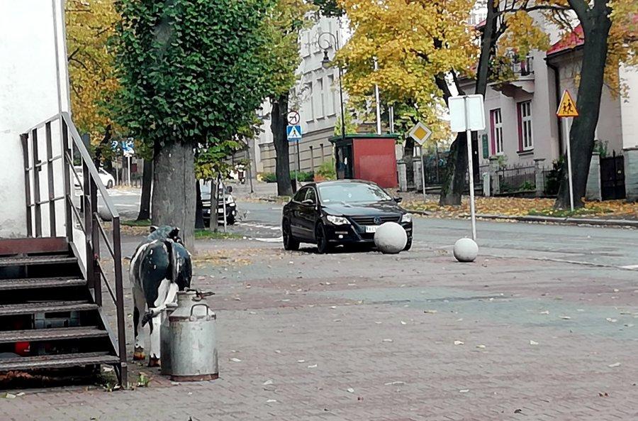 """""""Mistrzowie parkowania"""" na Alei Henryka w Chrzanowie"""