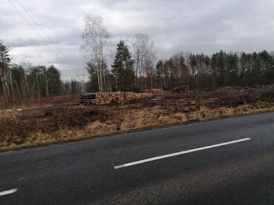 Las niknie w oczach. Przybywa miejsc bez drzew