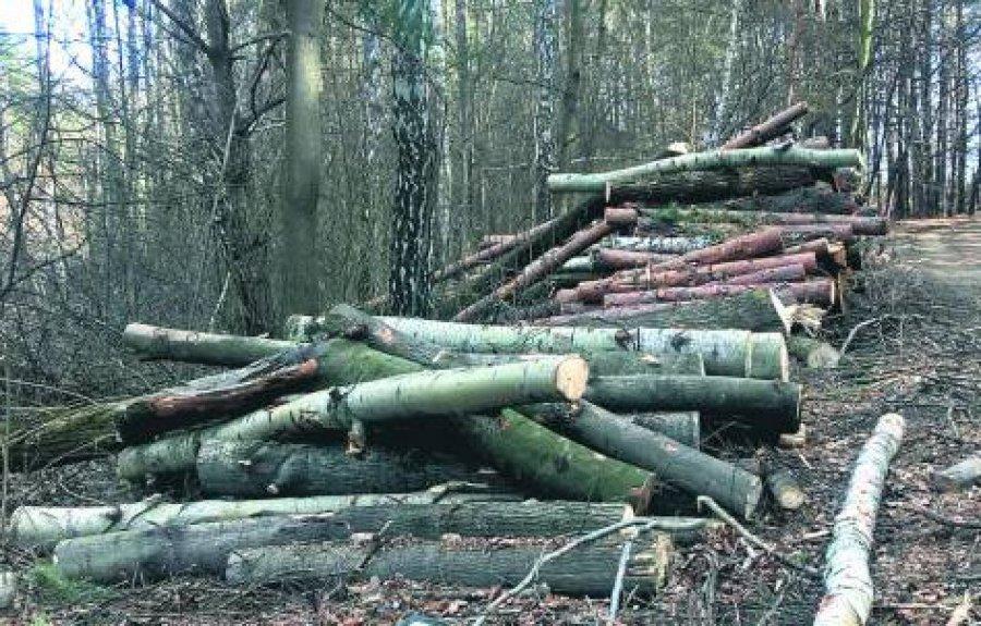 OPINIA. Las to fabryka drewna